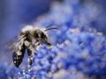 زنبور عسل (3)