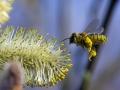 زنبور عسل (5)