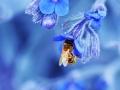 زنبور عسل (9)