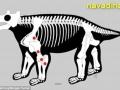زشت ترین گاو تاریخ (5)