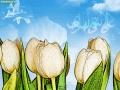 ولادت امام هادی (ع) (7)_Copy1