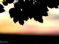 bardashte zereshk (14)