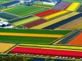 NETHERLANDS-AGRICULTURE-FLOWERS-FEATURE