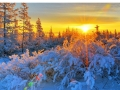 Gorgeous Sunrise Over A Forest In Winter HD Desktop Background