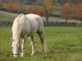 horse (10)