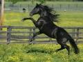 horse (11)