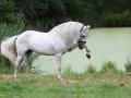 horse (13)