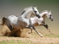 horse (14)
