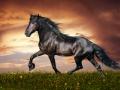 horse (15)