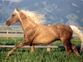 horse (18)