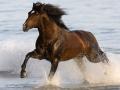horse (5)