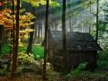 کلبه جنگلی (11).jpg