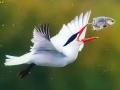 تصاویر دیدنی از دنیای زیبای حیوانات