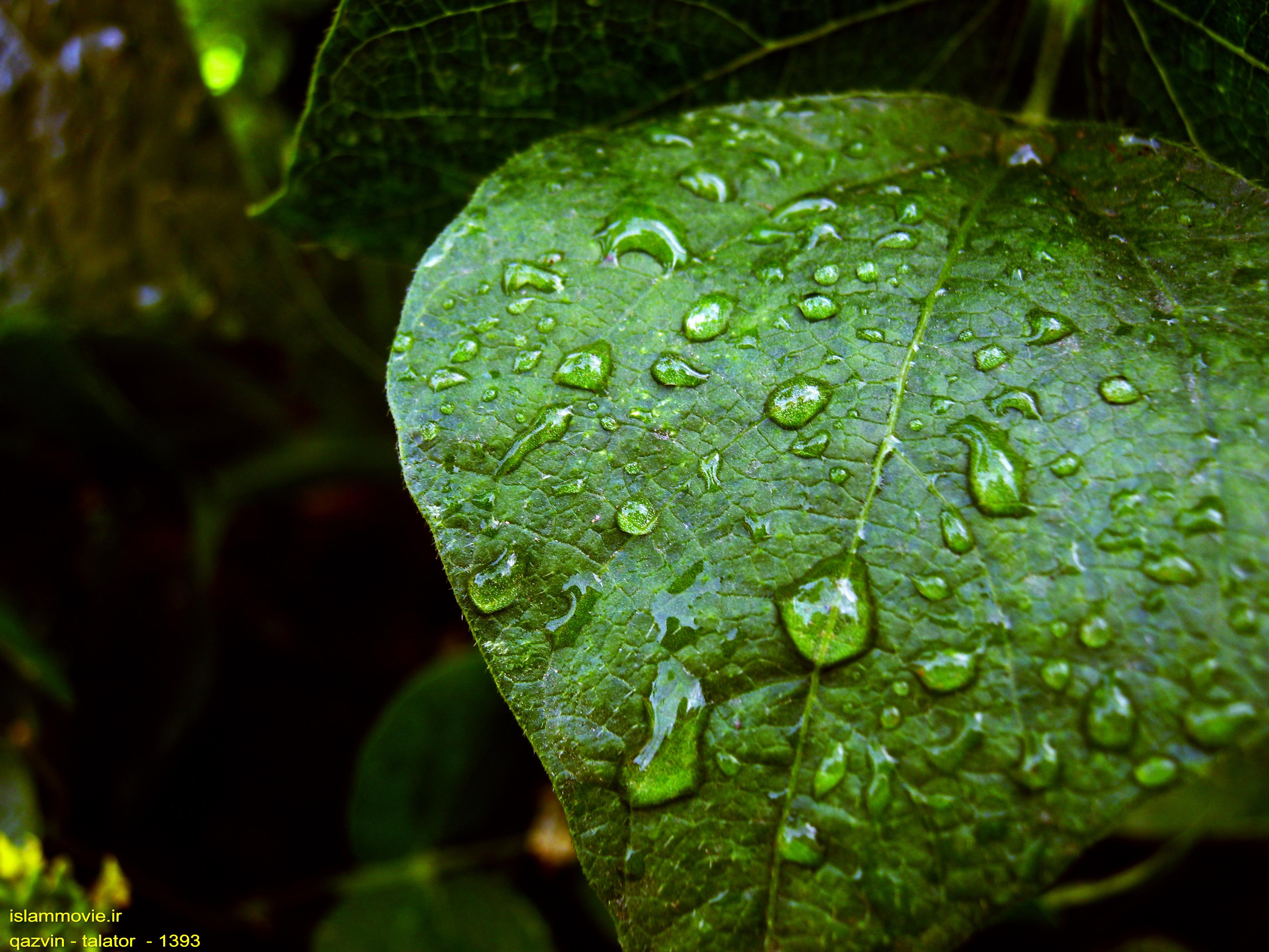 عکس های جالب طبیعت
