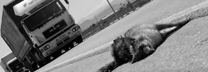 کلیپ تصادفات وحشتناک با حیوانات