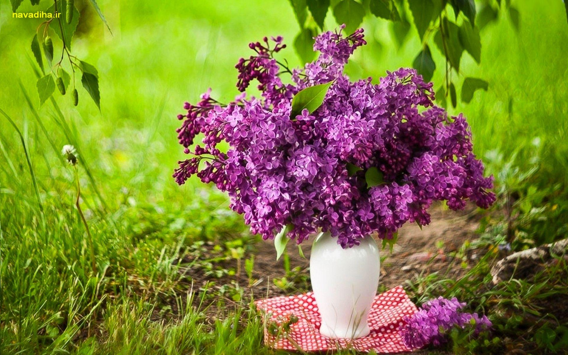 عکس فصل بهار با کیفیت hd