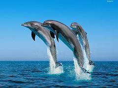عکس گرگ دلفین یوز پلنگ کیفیت بالا – WIDE HD