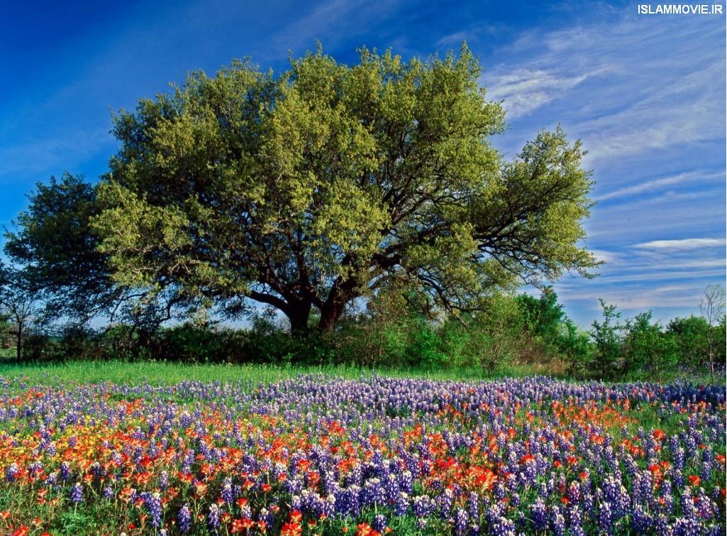 عکس های فصل بهار با کیفیت بالا