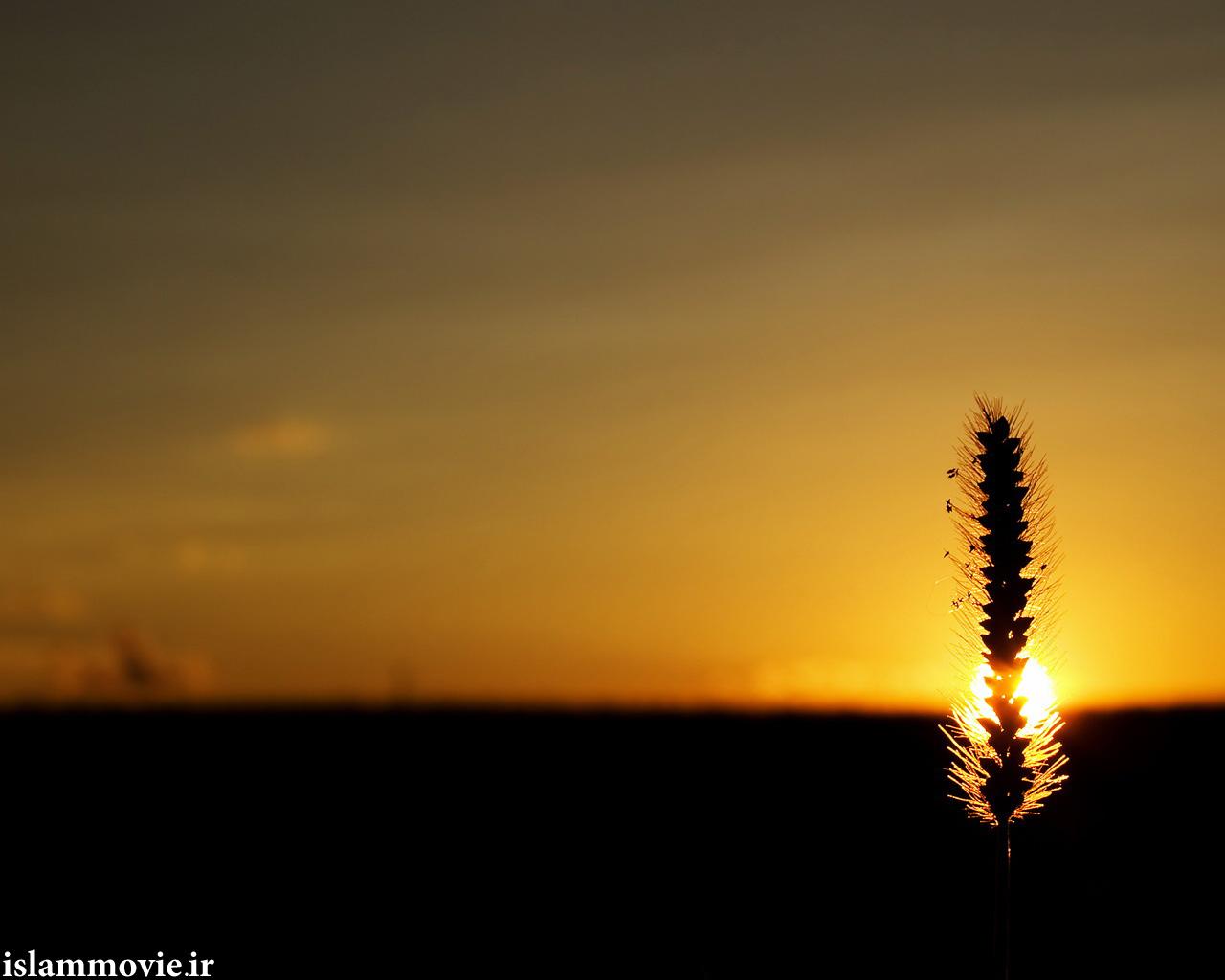 عکس غروب آفتاب با کیفیت