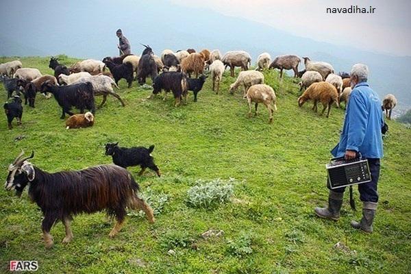 نیو زیلند ایران ، کهگیلویه و بویر احمد / طبیعت زیبا و دیدنی + عکس